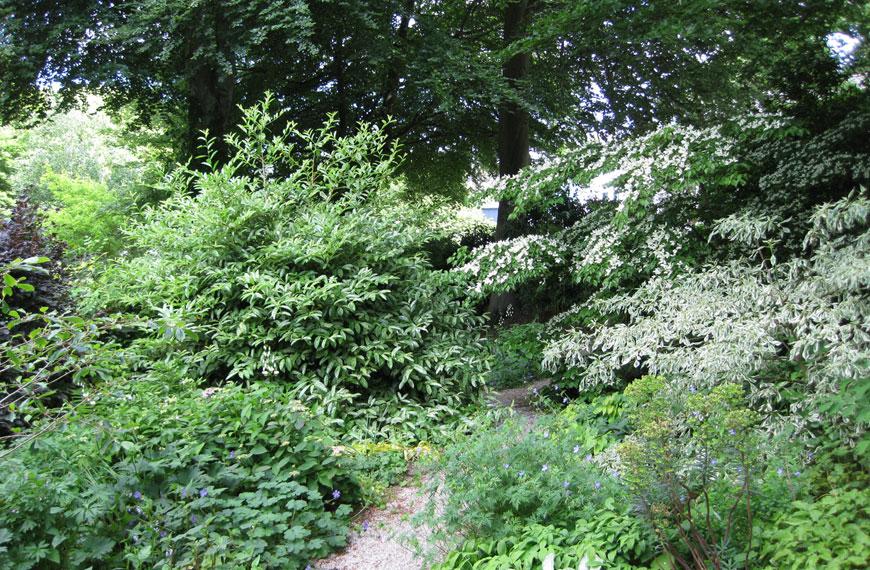 The Woodland Walk